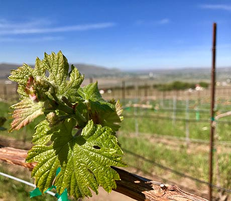 Donations | Canvasback Wine